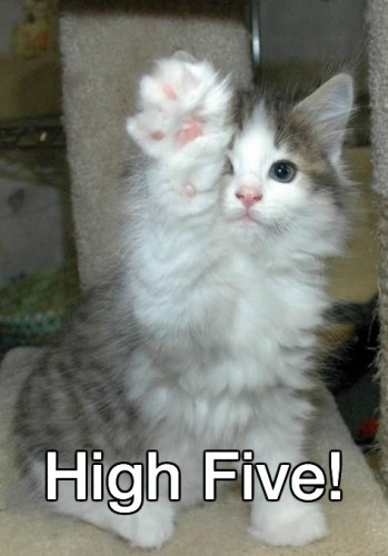 high_five_kitten-349x500.jpg
